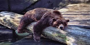 hibernation.jpg